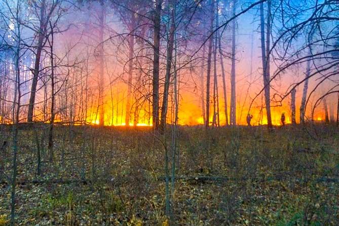Уточненная информация МЧС о пожаре в лесу Тольятти 6 октября 2019 года