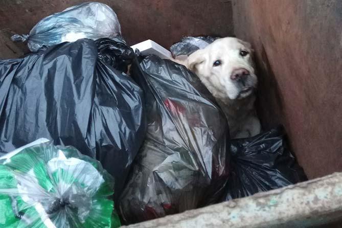 Жесткое обращение с животными: Что понимается под жестким обращением