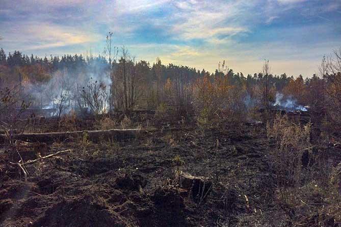 сгорели молодые деревья