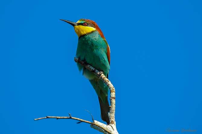 Тропическая птица Самарской Луки
