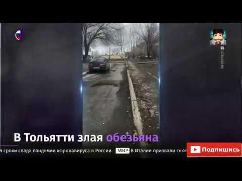 В Тольятти обезьяна напала на девочку