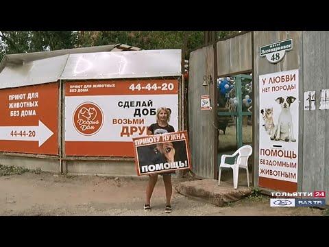Приют для животных в Тольятти продолжит свою деятельность
