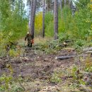 Как меняется тольяттинский лес