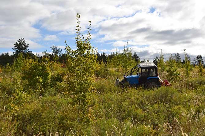 трактор в лесу