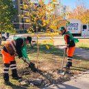 В Тольятти на улице 40 лет Победы посадили саженцы березы, клена и рябины