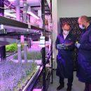 Листовые салаты, пряные травы и съедобные цветы, выращенные на тольяттинской ферме, можно купить в гипермаркетах